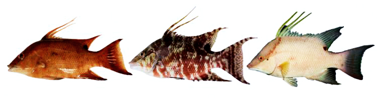 This color-changing fish can \u0027see\u0027 with its skin - Futurity