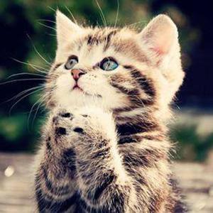 122814-cats-pretty-cat