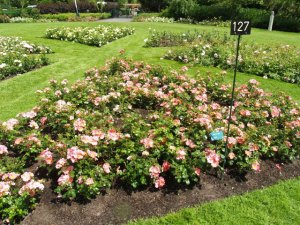 Hague Test Rose Gardens