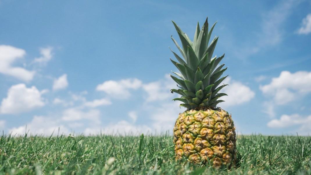 The Healing Benefits of Pineapple Gaia