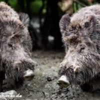 Fotos von wilden Tieren