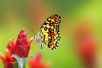 Attracting Butterflies & Pollinators to Your Garden