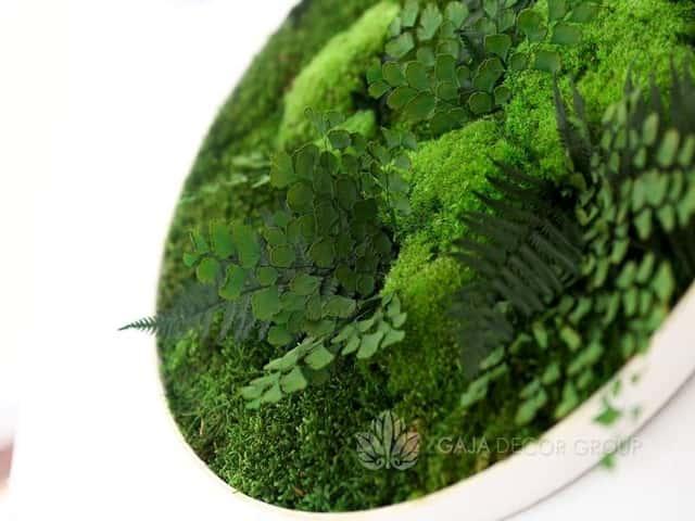 Moss frames - GAJA DECOR GROUP