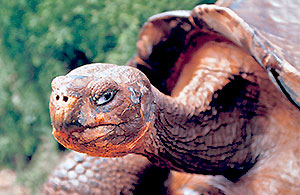 Lonesome George specie