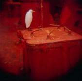 vogel-1 copy