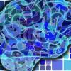 Cento nuove regioni in più nel cervello