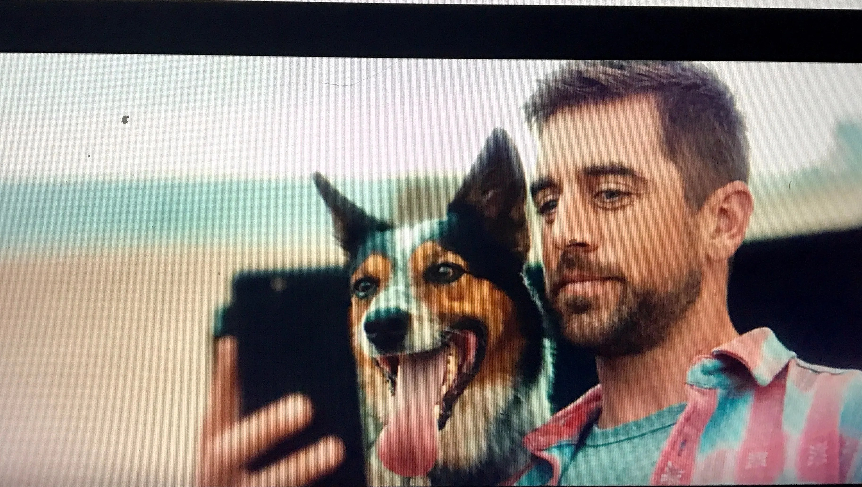 Comfortable New Farm Commercial Aaron Rodgers Dog Gif Aaron Rodgers Dog Selfie Dog Star Aaron Clay Matws bark post Aaron Rodgers Dog
