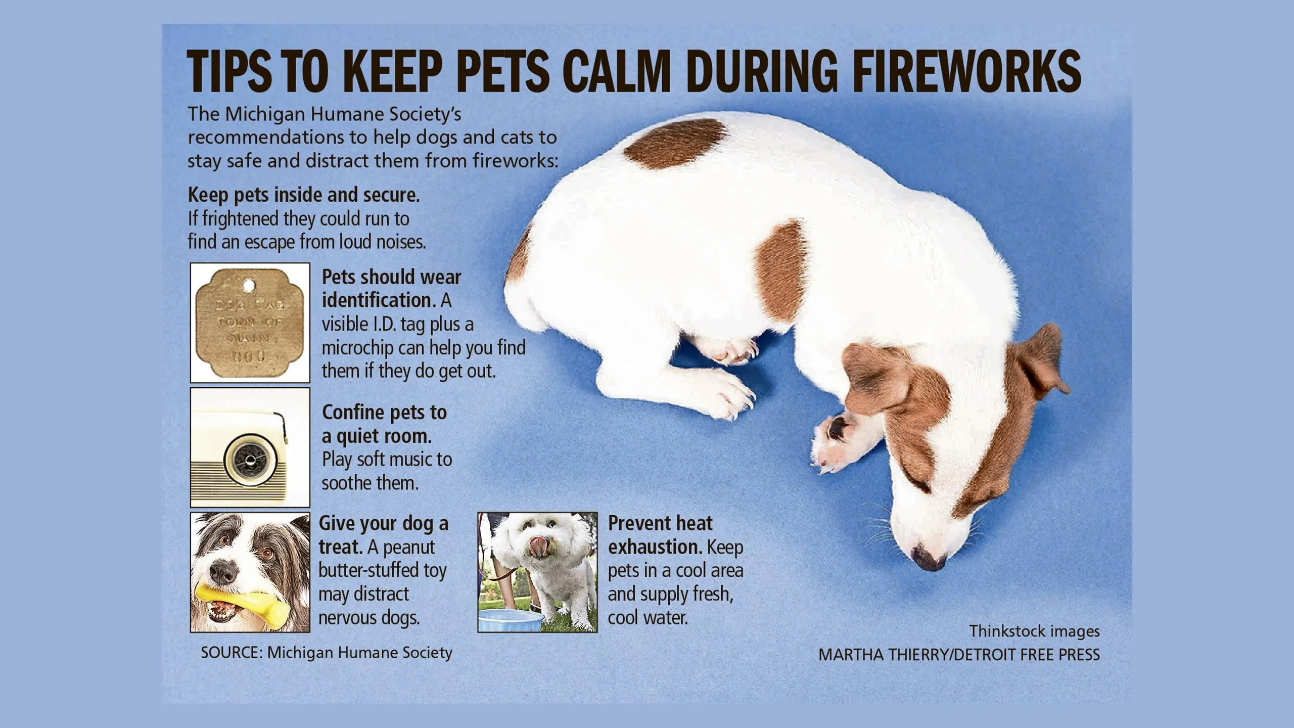 Comfortable Dogs Spotify Ing Music Let Your Dog Freak Out Over Fireworks Ing Music Dogs During Thunderstorms bark post Calming Music For Dogs