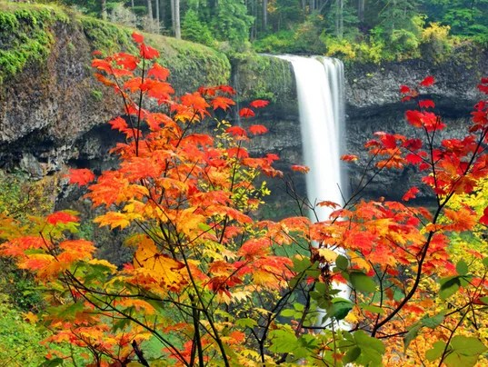 Snoqualmie Falls Wallpaper Incredible Fall Foliage Hikes