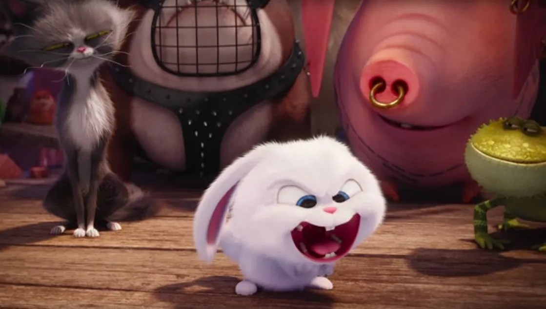 White Cute Cats Wallpapers Love For Animals Inspired The Secret Life Of Pets