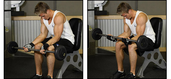 Barbell Wrist Curl - Click for instructions