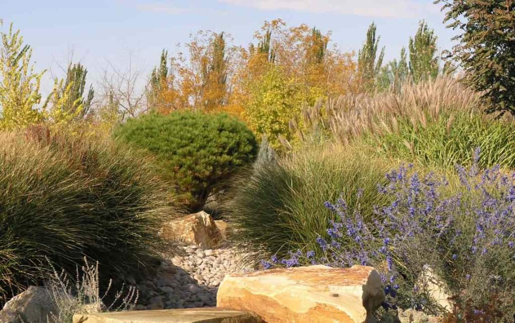 Water-Wise Landscaping Guide Garden View Landscape, Nursery  Pools