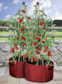 Haxnicks Tomato Patio Planter - Pack of 2 - 13.95 ...