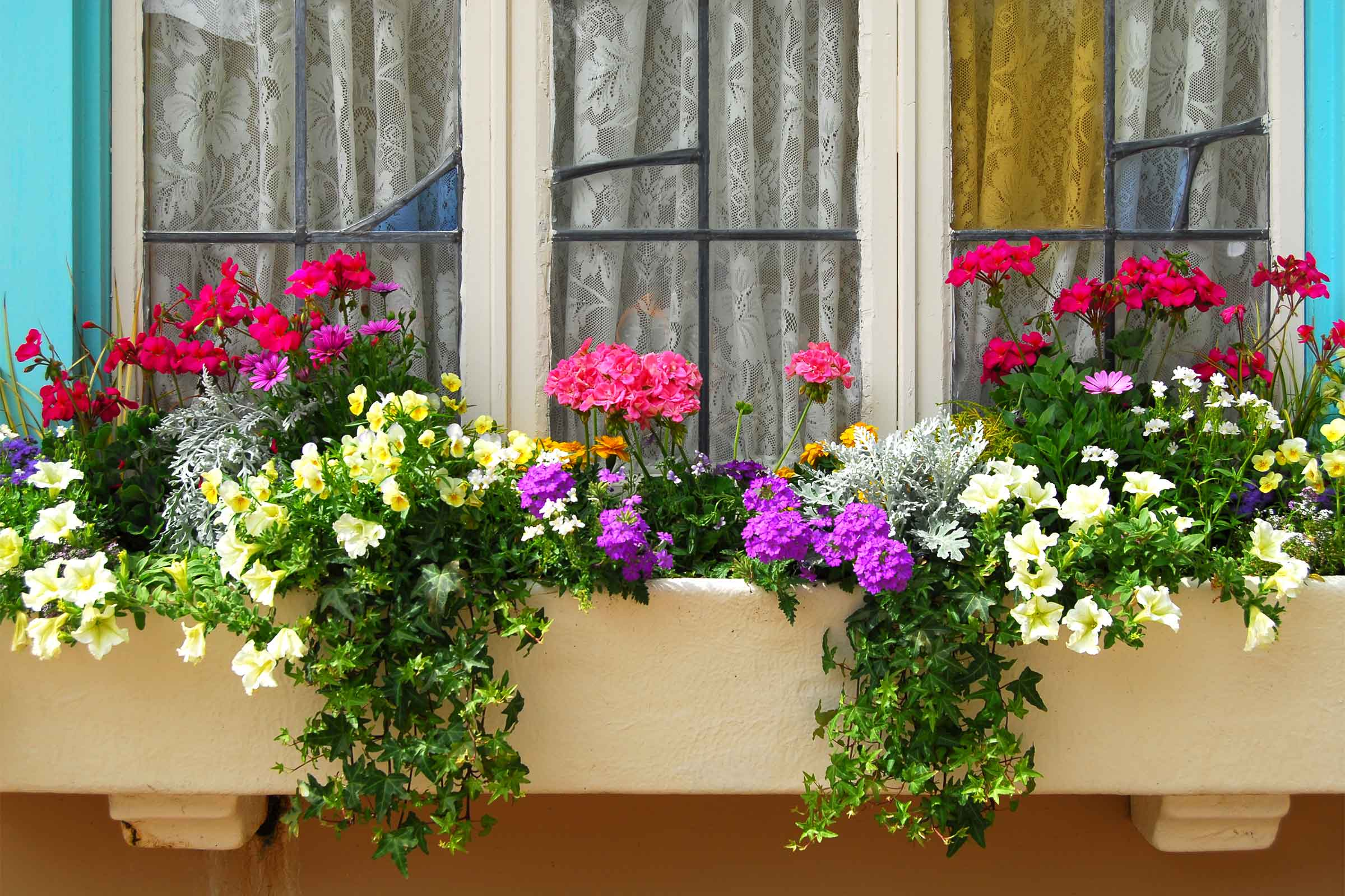 Filling Those Window Boxes Flower Species That Thrive