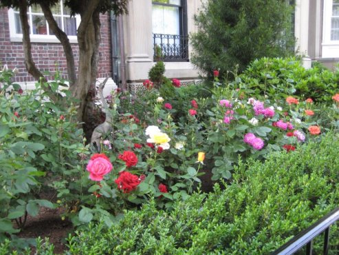 Commonwealth Avenue Roses