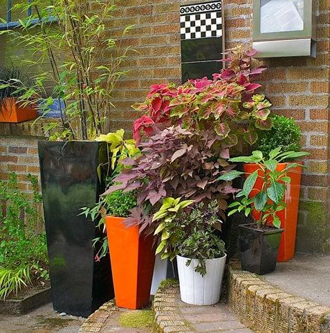 Container Gardens Made For The Shade Garden Design
