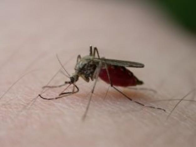 Zanzare in Giardino: Ecco come eliminarle per sempre!