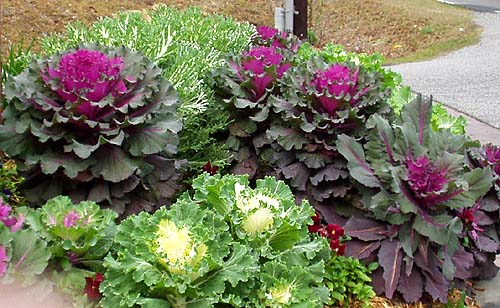 Explore Cornell - Home Gardening - Flower Growing Guides - Growing