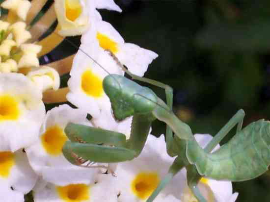 10 Most Beneficial Gardening Insects