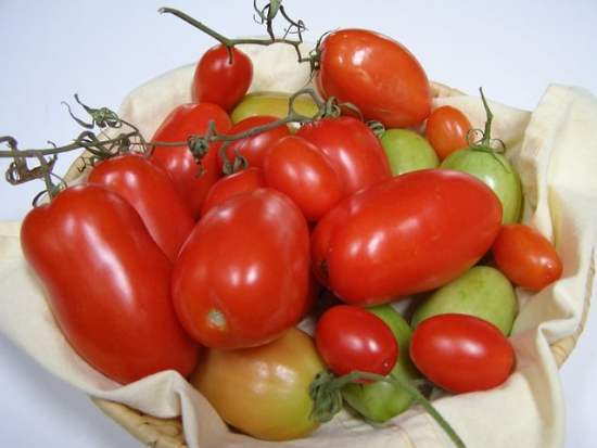 Growing Roma Tomatoes