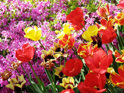 List of Flower Names, from A to Z!