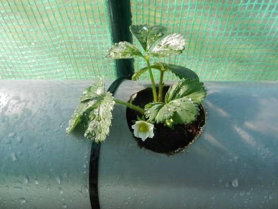 building a strawberry planter