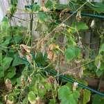 Reduce Fungal Diseases in Your Garden