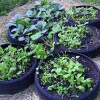 10 Weird Intensive Gardening Methods That Really Work