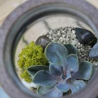 7 Brilliant Mason Jar Gardening Ideas
