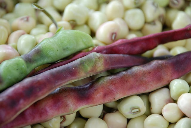 Guide To Growing Southern (Field) Peas
