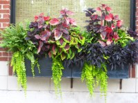 Container Gardening Ideas - Protecting Window Flower Boxes