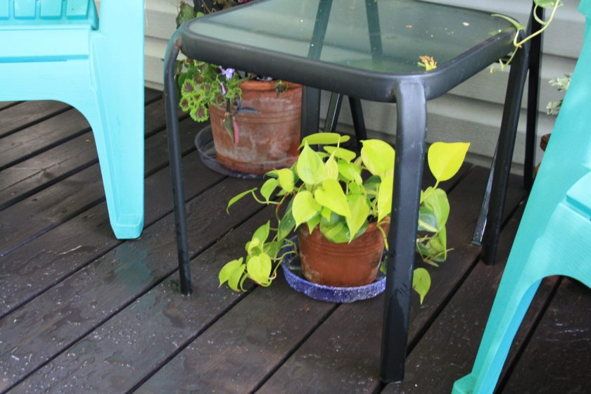 Pothos glowing against Black Stained Deck
