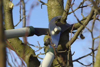Best Time For Pruning Fruit Trees – How To Prune A Fruit Tree