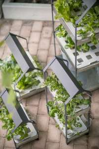 New from Ikea: A Hydroponic Countertop Garden Kit - Gardenista
