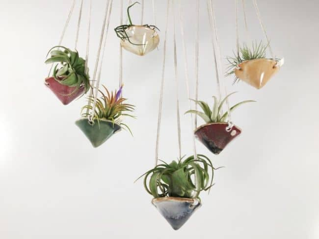 55 Eye Catching Air Plant Display Ideas Gardenoid