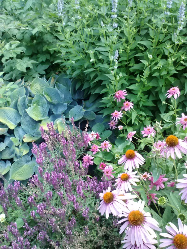 cone flower, thyme, agastache