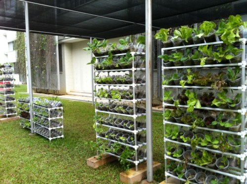 Medium Of Vegetable Vertical Garden