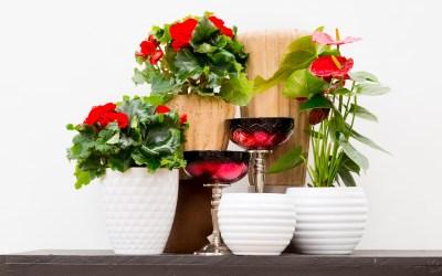 Flower Pots that POP!