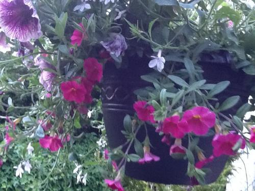 Planting flowers in cinder blocks..