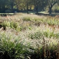 Gräser – eine Bereicherung im Garten