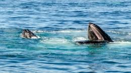whale-watching-boston-trip-2016-2