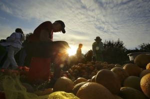 Family Fund Gleaning