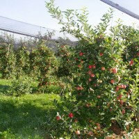 Der Weg des Apfels im Jahresverlauf