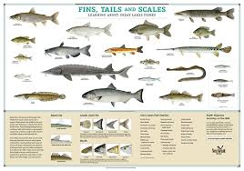 No scales no fins no good gathering of christ church for Fish with scales and fins