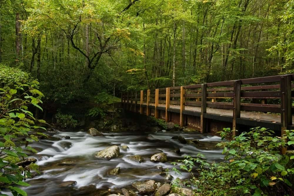 Gatlinburg In The Fall Wallpaper Top 5 Things To Do In The Smoky Mountains For Nature