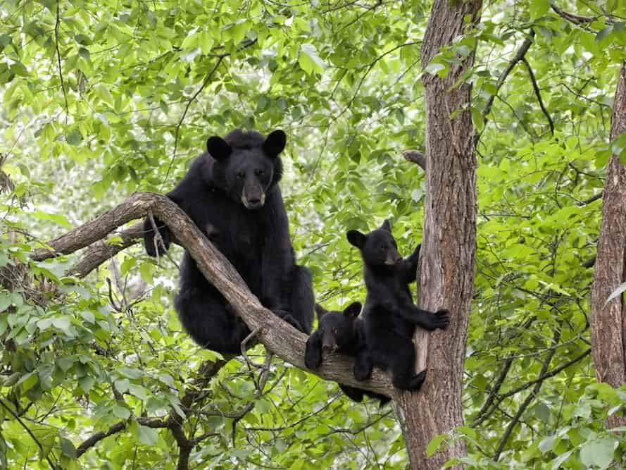 Fall Bird Feeder Wallpaper 4 Tips For Seeing Smoky Mountain Black Bears In The Wild