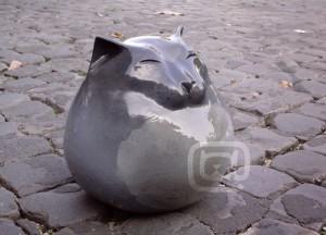 gatto di strada