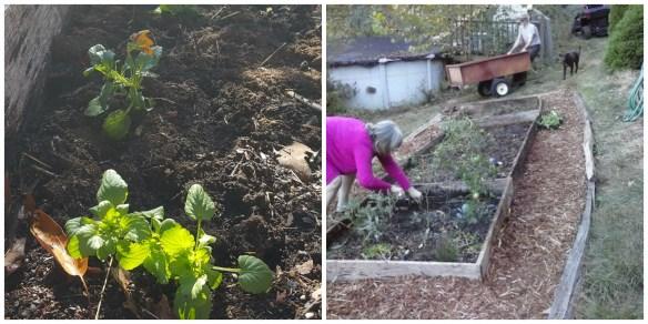 garden-me-pansies-collage