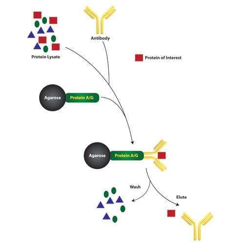 Immunotechnology Study Kits For Educators From G-Biosciences