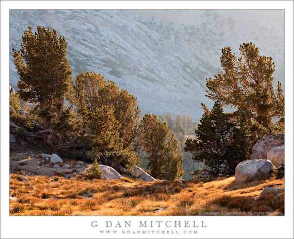 Autumn Light, Yosemite High Country